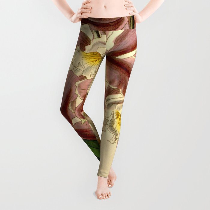 Cattleya intermedia Leggings