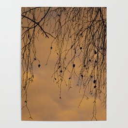 sunny branches and clouds Poster