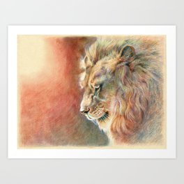 African Lion Colored Pencil Drawing Art Print