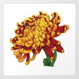Floral Theme- Chrysanthemum Watercolor Flower Art Print
