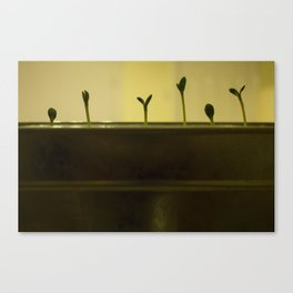 Baby Sprouts Canvas Print
