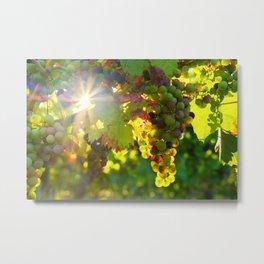 Wine Grapes in the Sun Metal Print