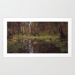 Forest Swamp Art Print