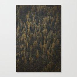 Alaska Tree Wall Canvas Print
