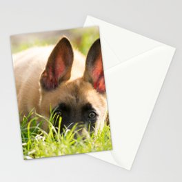 I'm not a fox but a Malinois puppy Stationery Cards