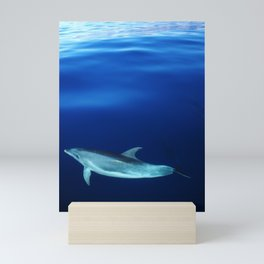 Dolphin and blues Mini Art Print