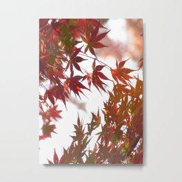 Momiji 02 Metal Print