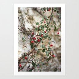 Drops of Crimson  Art Print
