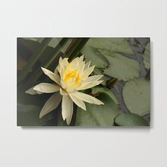 Pond's beauty Metal Print