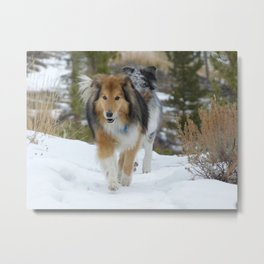 Snow Dogs Metal Print
