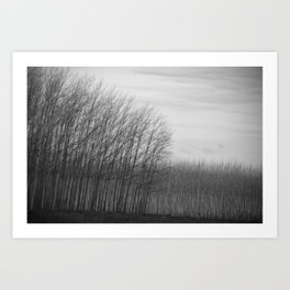 oregon (tree farm) Art Print