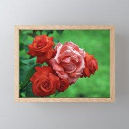 Branch of Red Roses Framed Mini Art Print