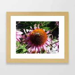 #406 flowers and bugs/bee bitterroot mt Framed Art Print