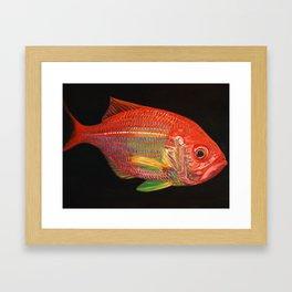Golden Snapper Framed Art Print