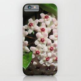 Hoya Flowers iPhone Case