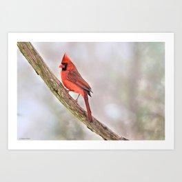 Simplicity: Northern Cardinal Art Print