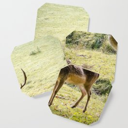 The Deer Coaster