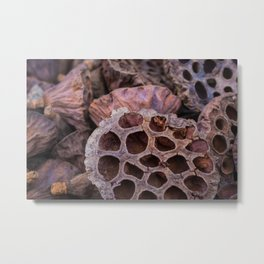 Dried lotus Metal Print