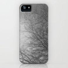 Winter trees 1 Slim Case iPhone (5, 5s)