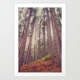 Forest of your Dreams Art Print