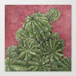 mexican cactus Canvas Print