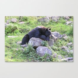 Contemplative Black Bear Canvas Print