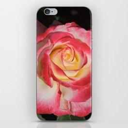 Multi-Hued Rose iPhone Skin