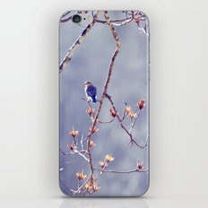 A Bluebird for Isabelle iPhone & iPod Skin