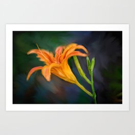 Day Lilly Art Print