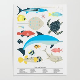 Coral reef animals Poster