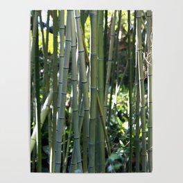 Bamboo zen calm Poster