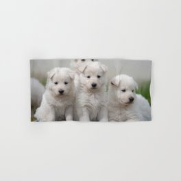 4 white Swiss shepherd dogs Hand & Bath Towel
