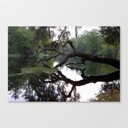 Spring Light on the Withlacoochee River Canvas Print