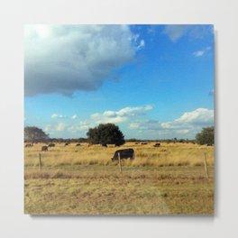 Florida Cattle Metal Print