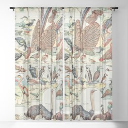 Wild Birds // Oiseaux by Adolphe Millot XL 19th Century Science Textbook Diagram Artwork Sheer Curtain