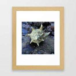 Murex Framed Art Print