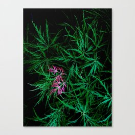 A bit of red leaves in a green bush Canvas Print