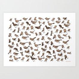 Grey birds Art Print