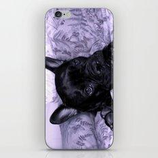 Purple Frenchie iPhone & iPod Skin
