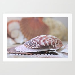 Seashell Collection Still Life Photograph Art Print