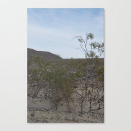 Death Valley Rare Yellow Flowers of Spring Bloom 2016 Number Three Vertical Canvas Print