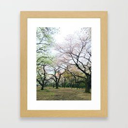 twisty cherry blossom trees Framed Art Print