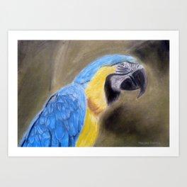 Blue Macaw Painting Art Print