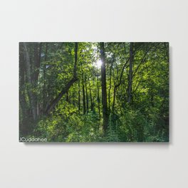 Woods at Iroquois Wetlands Metal Print