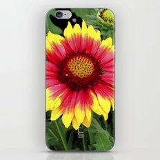 Sunset Blossom iPhone & iPod Skin