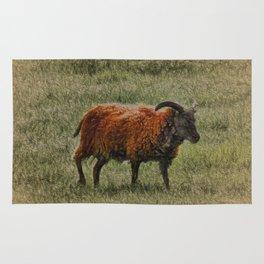 Soay Sheep Rug