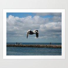Pelican Flight DPG160301d Art Print