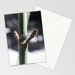Fly, Battle Creek Falls Stationery Cards