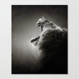 Lion displaying teeth Canvas Print