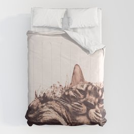 morning? Comforters
